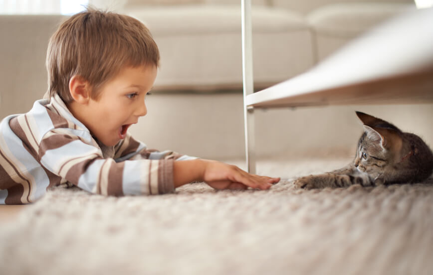 boy and cat playing after Alpine Carpet Cleaning services